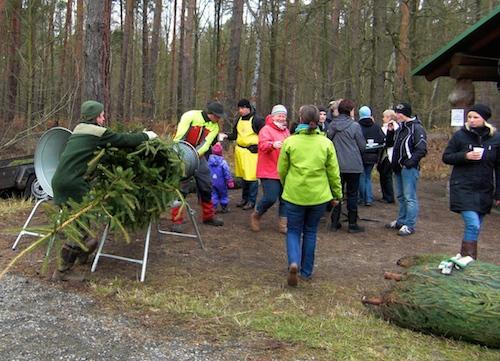 Bild 11 - Weihnachtsbaumselberschlagen im Naunhofer Forst